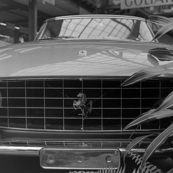 Ferrari 250GT grille and badge